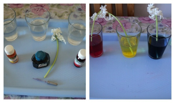 experimentflori